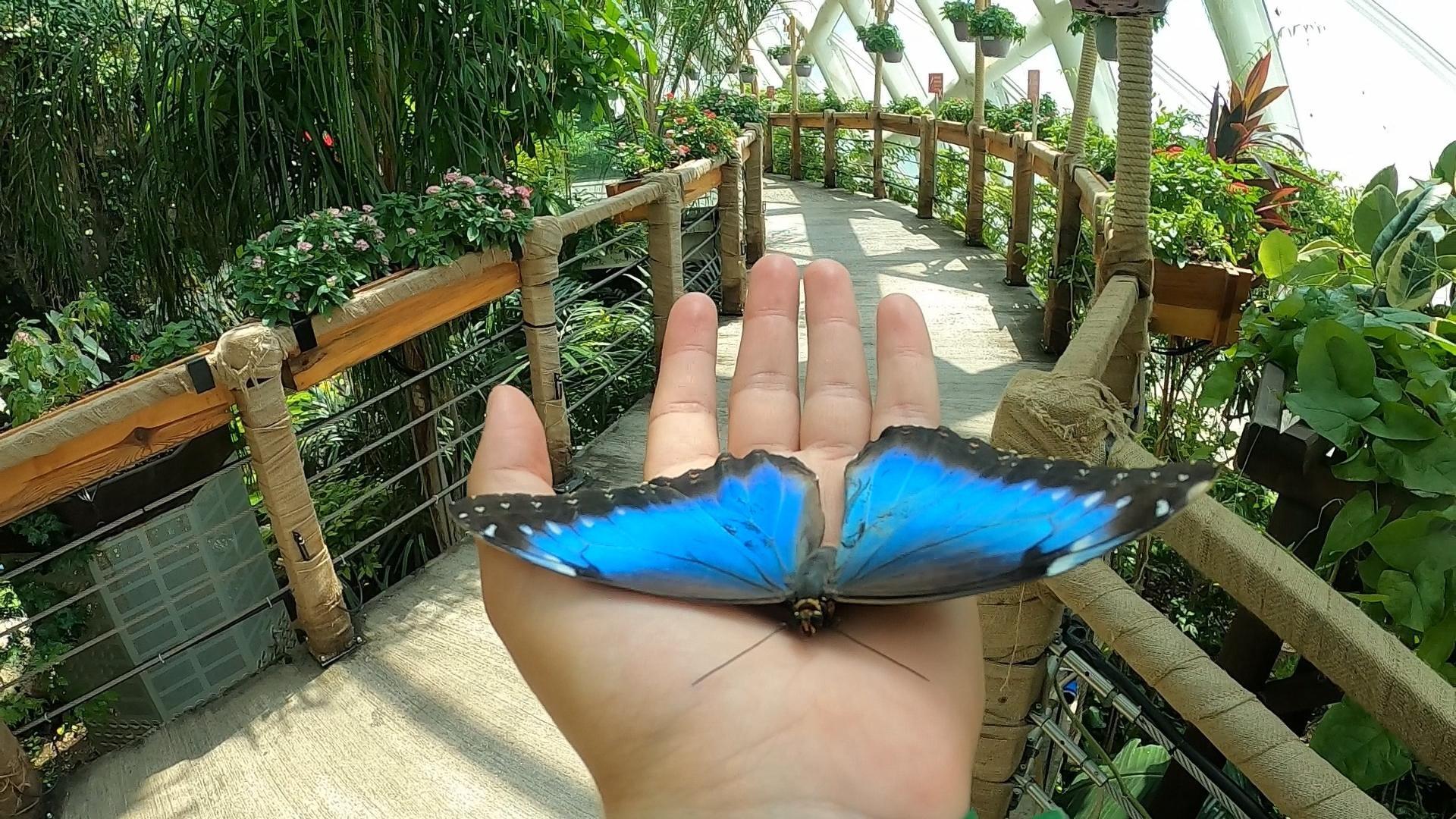 kelebeklerin-buyulu-dunyasi-kelebekler-vadisi-001.jpg