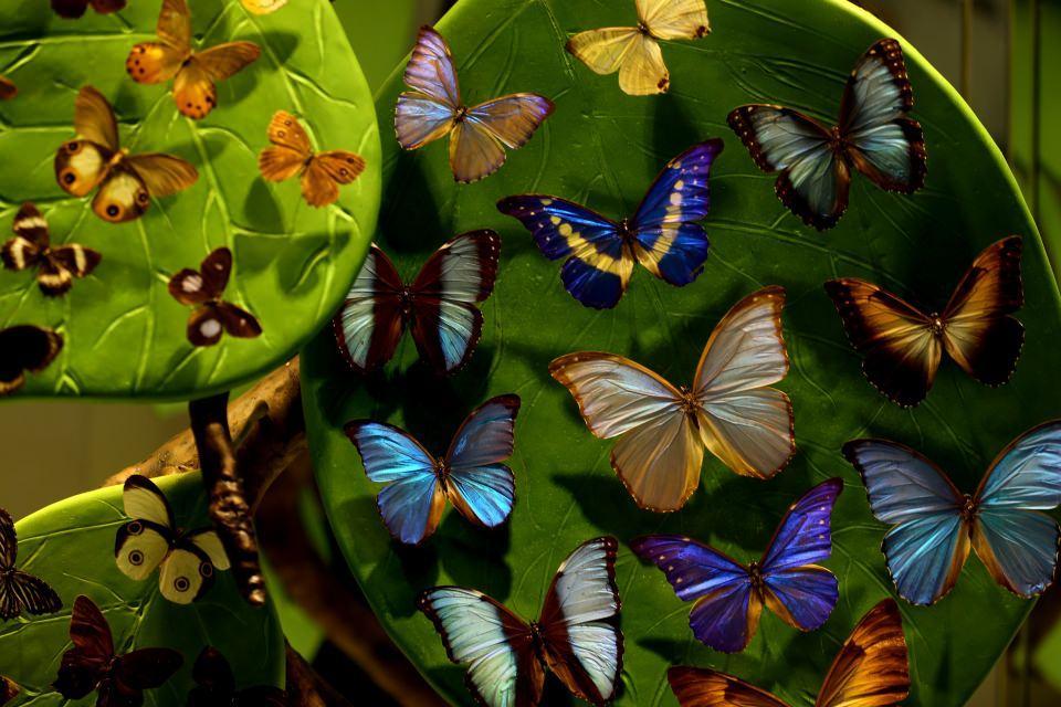 kelebeklerin-buyulu-dunyasi-kelebekler-vadisi-002.jpg