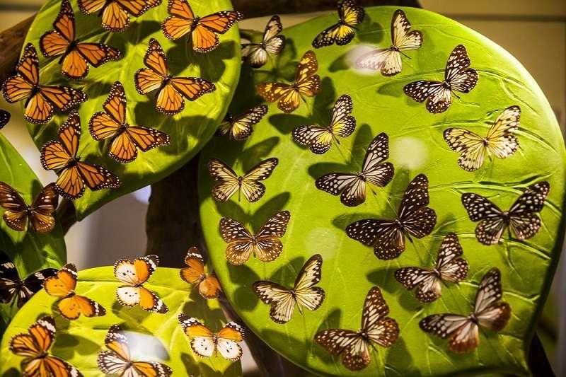 kelebeklerin-buyulu-dunyasi-kelebekler-vadisi-003.jpg
