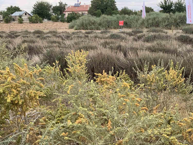 erozyonla-mucadelede-amerikan-calisi-basarisi-003.jpg